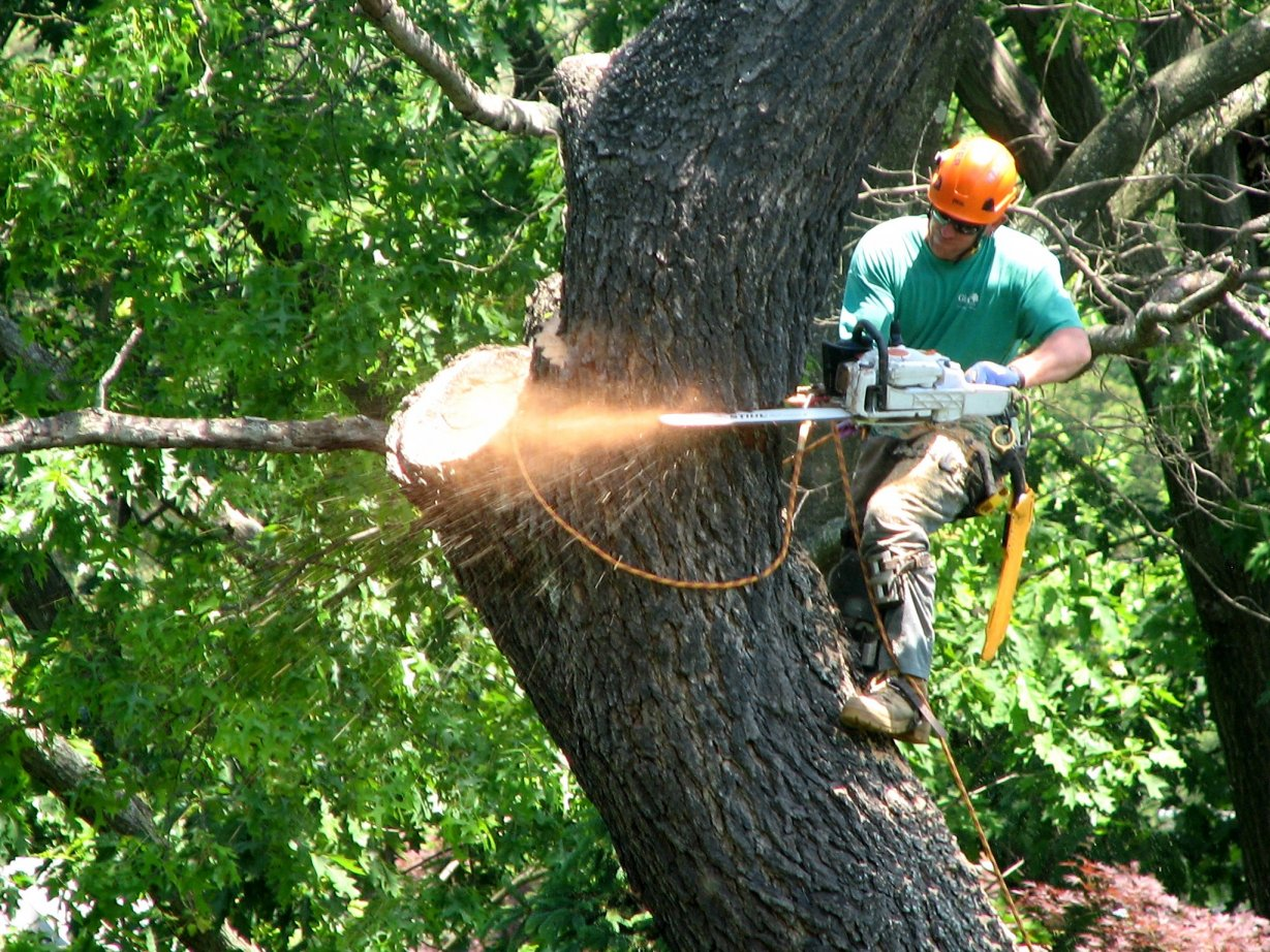 Top 3 Reasons To Hire a Professional Tree Service in 2021 | NSNBC